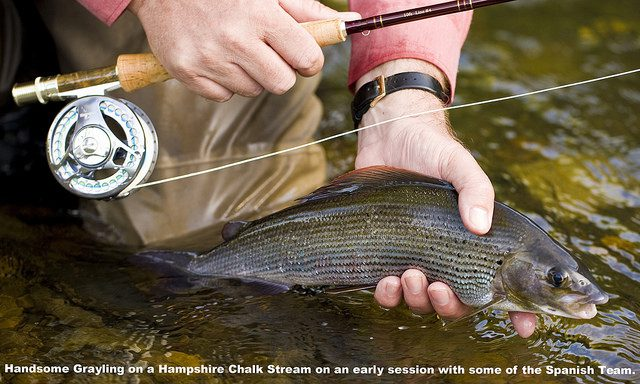 Grayling Photo