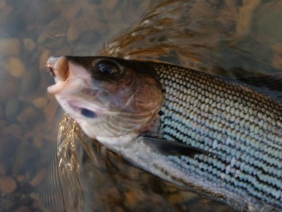 Trio, duo or dry fly - all 3 methods are viable in winter says Jeremy Lucas