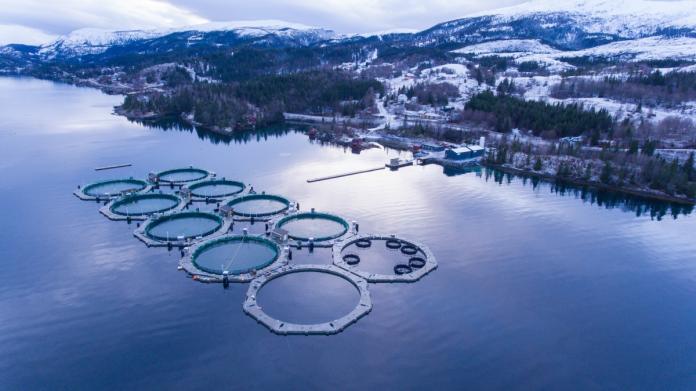 Allevamento di circuito chiuso di salmone norvegese in mare aperto
