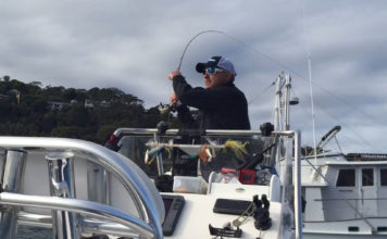 Fly fishing for Kingfish