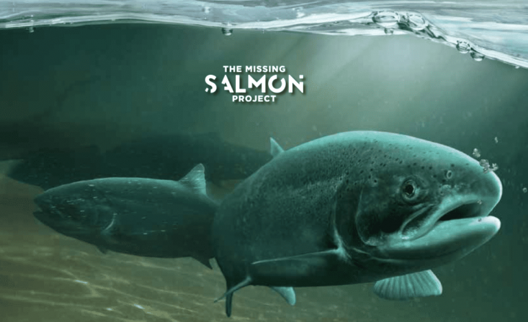 Missing Salmon Project